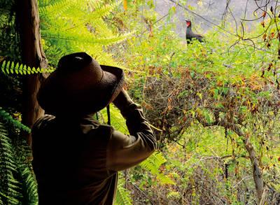 Iván Vallejos, guardaparque del Área de Conservación Privada de Chaparrí (Lambayeque, Perú), observa a una pava aliblanca durante los trabajos de seguimiento de esta especie (foto: Heinz Plenge).