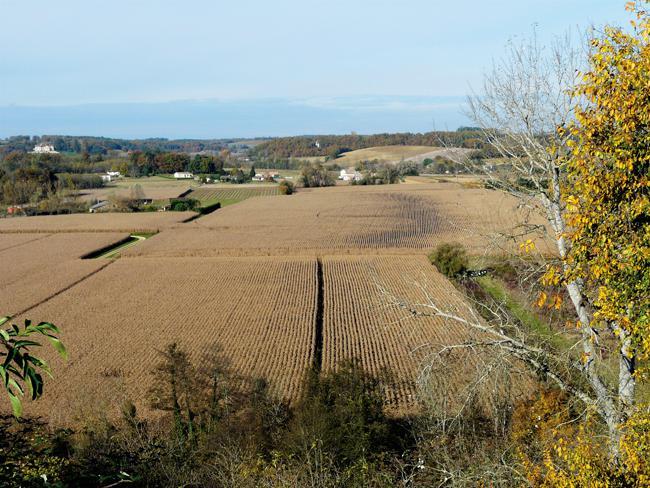 Cultivo de maíz en el valle de Dropt, en Monségur (Francia). La agricultura intensiva es uno de los principales lastres para la recuperación de la biodiversidad europea. Foto: Père Igor / Wikicommons.