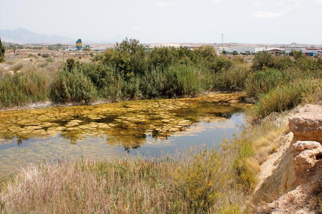 Panorámica de la pequeña laguna de Fontcalent, que acoge la única población de fartet del término municipal de Alicante, en un entorno altamente humanizado (foto: Francisco Ferri).