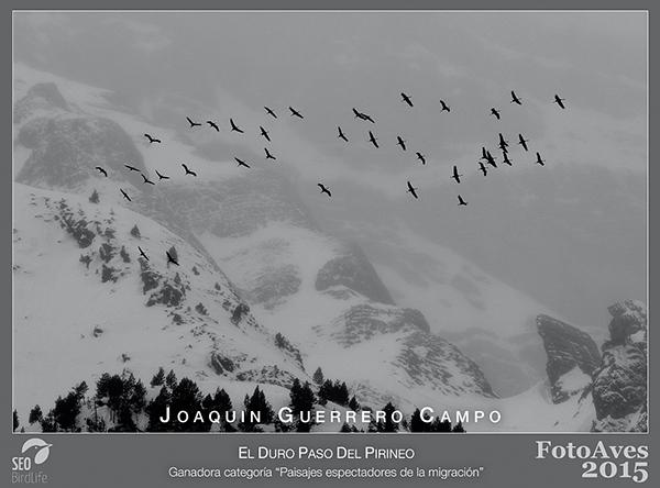 Esta fotografía de un grupo de grullas en migración por el Pirineo ha sido una de las premiadas en el FotoAves 2015 (foto: Joaquín Guerrero).