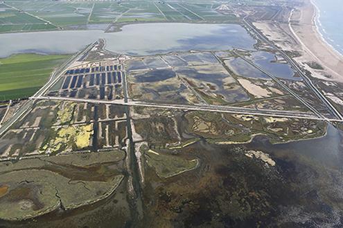 Restauración ecológica en dos lagunas del delta del Ebro