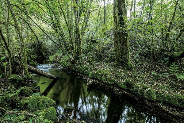 Tramo del r�o Chaballos, uno de los cuatro afluentes del r�o Esva que se muestrean en el noroeste de Asturias para el seguimiento cient�fico de su poblaci�n de salm�nidos (foto: Xiomara Cantera).
