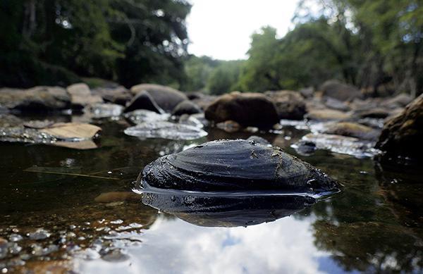 En busca de las náyades de los ríos Alberche y Águeda