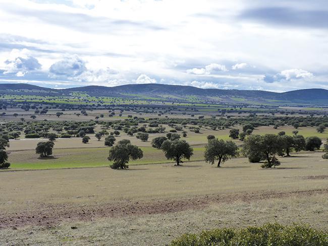 Panorámica de un sector de la comarca del Campo de Montiel (Ciudad Real) que podría verse afectado por la minería de tierras raras (foto: Plataforma Sí a la Tierra Viva).