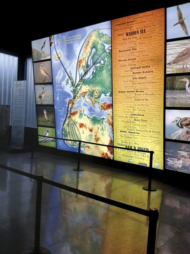 Panel luminoso con las grandes rutas migratorias de las aves, en el Urdaibai Bird Center (Bizkaia). Foto: José Antonio Montero.