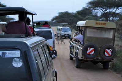 Varios vehículos con turistas rodean a un guepardo que cruza una pista en el Parque Nacional Tsavo Este (Kenia). Foto: Christopher T. Cooper / Wikicommons.