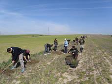 Varios voluntarios plantan un seto en un secano de Maqueda (Toledo). Foto: FIRE.