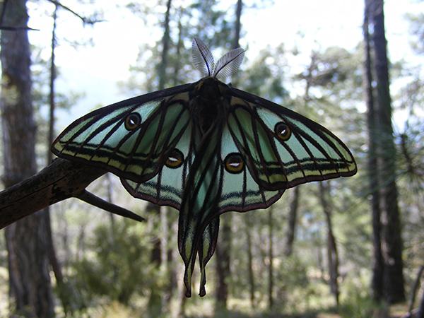 Salidas para observar a la Mariposa del Año 2016