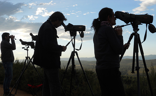 Naturalistas durante una espera de lobo en la sierra de La Culebra (Zamora). Foto: Javier Taleg�n.