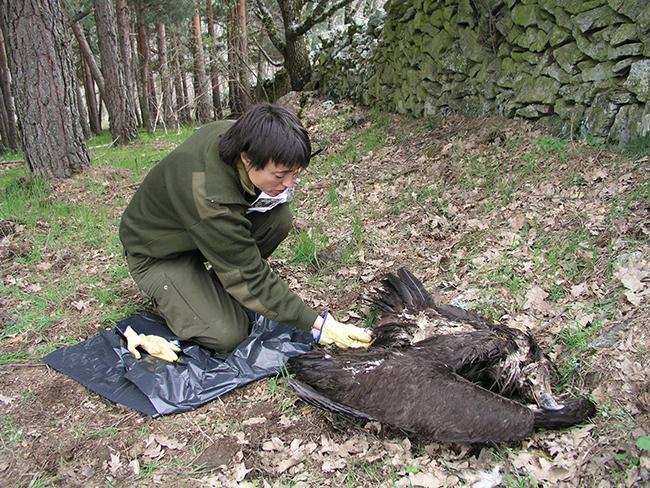 Casi 200.000 animales cayeron por veneno entre 1992 y 2013