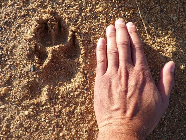 Encuentros en Doñana y Valsaín sobre rastreo y fototrampeo