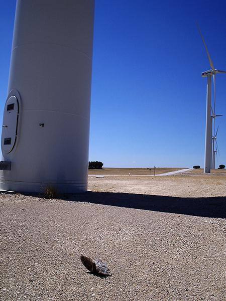 Vía libre a parques eólicos en Albacete con riesgo para aves