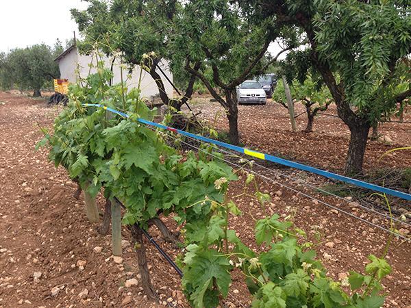 Proponen una alternativa para evitar la colisión de aves en viñas en espaldera