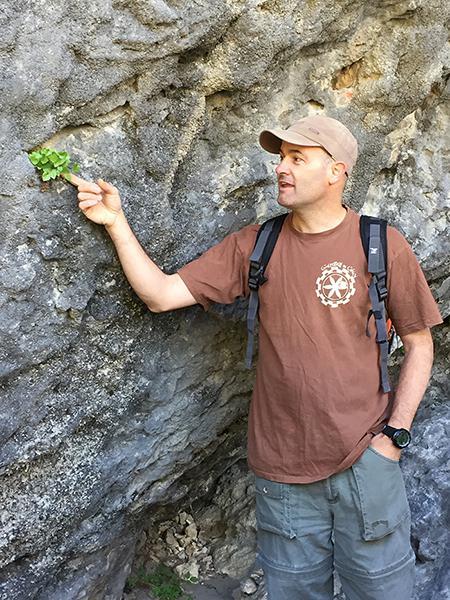 El botánico Daniel Goñi señala unos ejemplares de la planta rupícola Borderea chouardii sembrados en las cercanías de su única población natural, situada en la provincia de Huesca (foto: Juan Carlos Moreno).