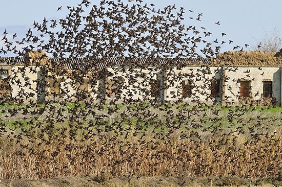 Aves y agricultura en la historia de Extremadura: del conflicto a la alianza