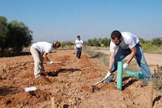 Varios voluntarios plantan setos para favorecer la biodiversidad en una zona agrícola del término municipal de Valdepeñas (Ciudad Real). Foto: FIRE.