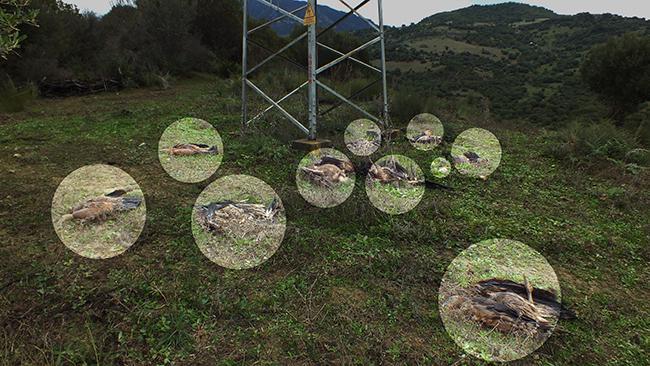 Los círculos indican donde se hallan los cadáveres de los diez buitres leonados (foto: Silvema Serranía de Ronda - Ecologistas en Acción).