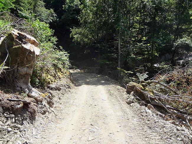 Daños a la vegetación en un tramo de la pista forestal abierta recientemente entre Asturias y León (foto: Coordinadora Ecoloxista d'Asturies).