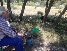 El pastor más veterano prepara la comida mientras el rebaño descansa vigilado por uno de los mastines (foto: Vicente Jurado).
