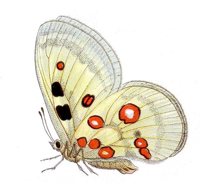 Mariposa del Año