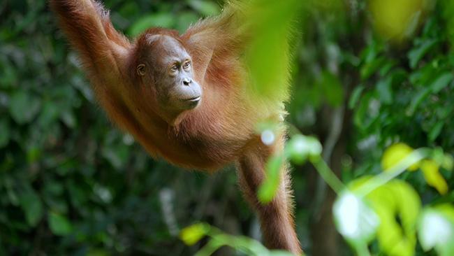 """Los bosques del planeta y sus moradores son protagonistas en la serie documental """"Planeta Selva"""" (foto: Terra Incognita Docs)."""