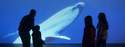 Una familia observa un recurso audiovisual de la exposición sobre los océanos (foto: MNCN).