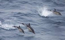 Observación de cetáceos y aves marinas durante 2017