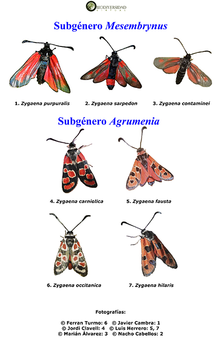 ¿Qué es el Atlas Visual de los Invertebrados Ibéricos?