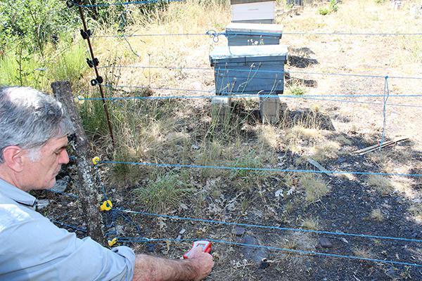 Un técnico comprueba el funcionamiento de un cercado doble electrificado, instalado para evitar la entrada del oso a un colmenar en el Alto Sil (León). Foto: Sofía Losada.