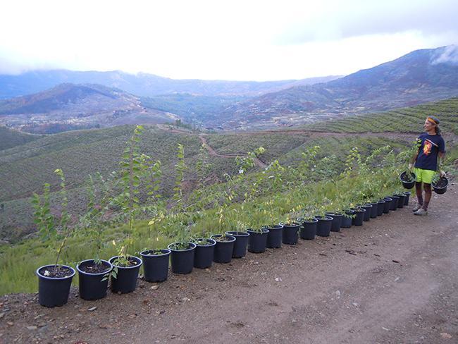 Plantones de árboles autóctonos preparados para su plantación en la zona de la sierra de Gata (Cáceres) calcinada por el incendio forestal de 2015 (foto: Reforest-Acción).