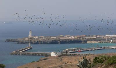Un bando de cigüeñas blancas sobrevuela la isla de Tarifa (Cádiz) y se dispone a cruzar el estrecho de Gibraltar (foto: Alejandro Onrubia).