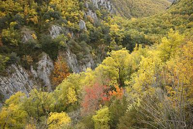 Paisaje otoñal en el valle del Iregua (La Rioja). ¿Cuántas especies puede albergar un bosque de este tipo? ¿Qué porcentaje de ellas puede pasar desapercibido? (foto: José Luis Gómez de Francisco).