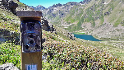 Cámara de fototrampeo cerca de uno de los lagos de Tristaina, en el Pirineo de Andorra.