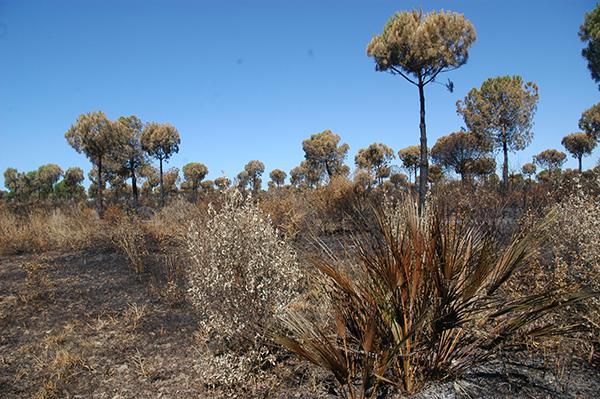 Zona afectada por el reciente incendio de Doñana (foto: SEO/BirdLife).