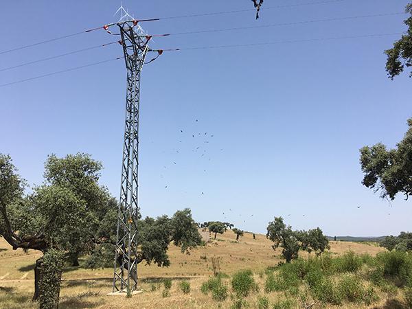 Poste recién corregido por Endesa en un tendido peligroso para las aves de Valencia de Mombuey (Badajoz). Al fondo vuela un numeroso grupo de buitres. Foto: Alfonso Godino / Amus.