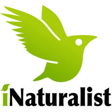 Avances en la gran plataforma on-line sobre la biodiversidad planetaria