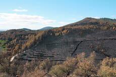 Pinar del término municipal de Acebo (Cáceres) afectado por el fuego en el gran incendio que tuvo lugar en la sierra de Gata en 2015 (foto : Proyecto Mosaico).