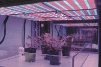 El cultivo de plantas en el espacio