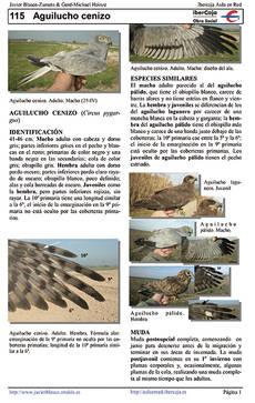 Primera página de la ficha del aguilucho cenizo en el atlas de aves fotográfico de Javier Blasco.