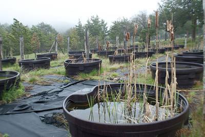 Una de las instalaciones de charcas artificiales del proyecto Iberian Ponds, situada en la Sierra de Guadarrama (Madrid). Foto: Xiomara Cantera.