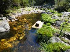 Plataforma flotante para la localización y captura de visones americanos, en el río Berbellido, afluente del Jarama, en la Sierra Norte de Guadalajara (foto: Terra Naturalis).