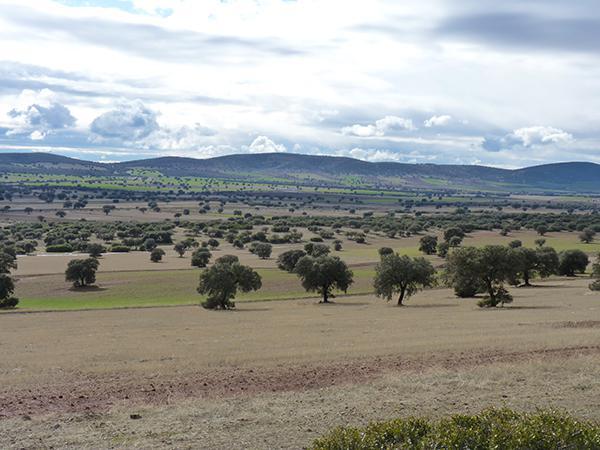 """Panorámica de un sector de la comarca del Campo de Montiel (Ciudad Real) que iba a verse afectado por la minería de tierras raras (foto: Plataforma """"Sí a la Tierra Viva"""")."""
