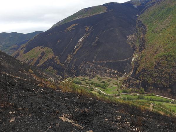 Laderas devastadas por el fuego en una zona osera del concejo asturiano de Degaña (foto: FOP).