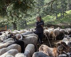 Pastora con cabras en el norte de Grecia (foto: Stamos Abatis).