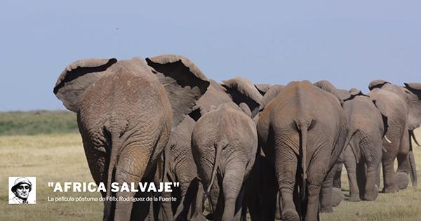 En rescate de 'África salvaje', la película póstuma de Félix