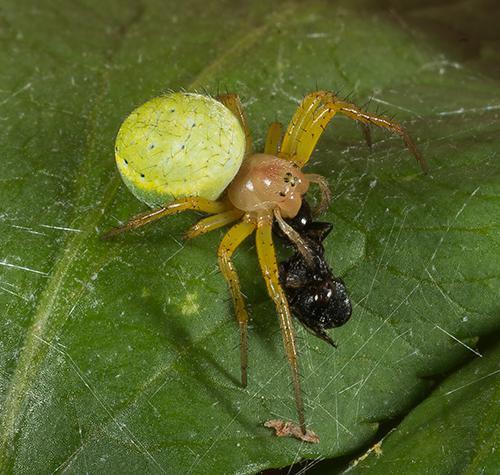 Un jardín lleno de arañas