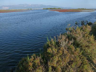 Extremo meridional del Delta del Ebro, con la sierra del Montsiá al fondo (foto: Rafael Serra).
