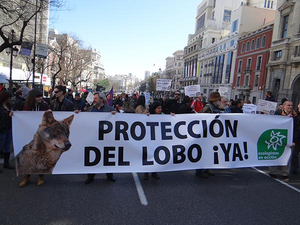 Pancarta de Ecologistas en Acción en la manifestación en favor del lobo celebrada en Madrid en 2016 (foto: José Luis García).