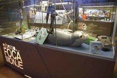 Vitrina de la exposición El regreso de la foca monje (foto: Miguel Ángel Cedenilla / Fundación CBD-Hábitat).