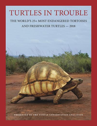 Alerta hacia las tortugas y galápagos más amenazados
